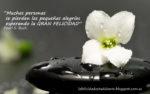 La belleza de una (simple) flor