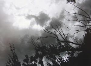 pajaro en tormenta