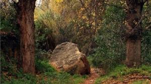 piedra camino
