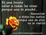 Es una locura odiar a todas las rosas porque una te pinchó…